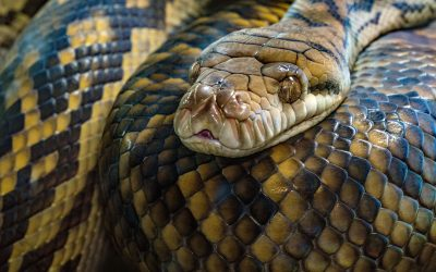 Childhood Shorts – Chapter 6: Snakes and Robbers