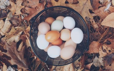 Childhood Shorts – Chapter 25: One Basket, All Eggs